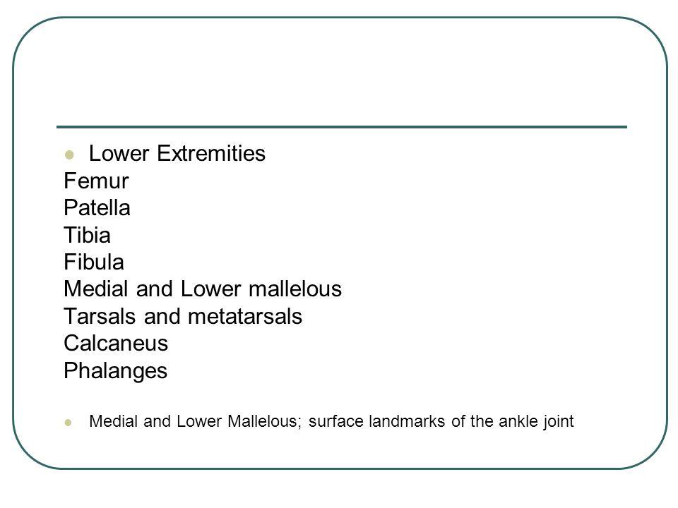 Lower Extremities Femur Patella Tibia Fibula Medial and Lower mallelous Tarsals and metatarsals Calcaneus Phalanges Medial and Lower Mallelous; surfac