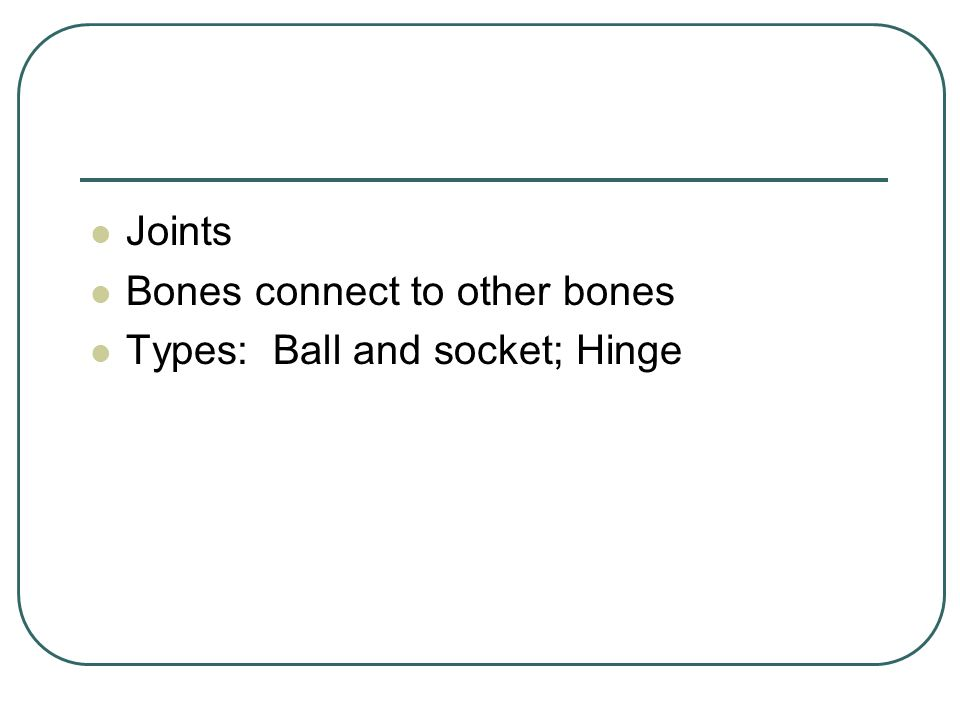 Joints Bones connect to other bones Types: Ball and socket; Hinge