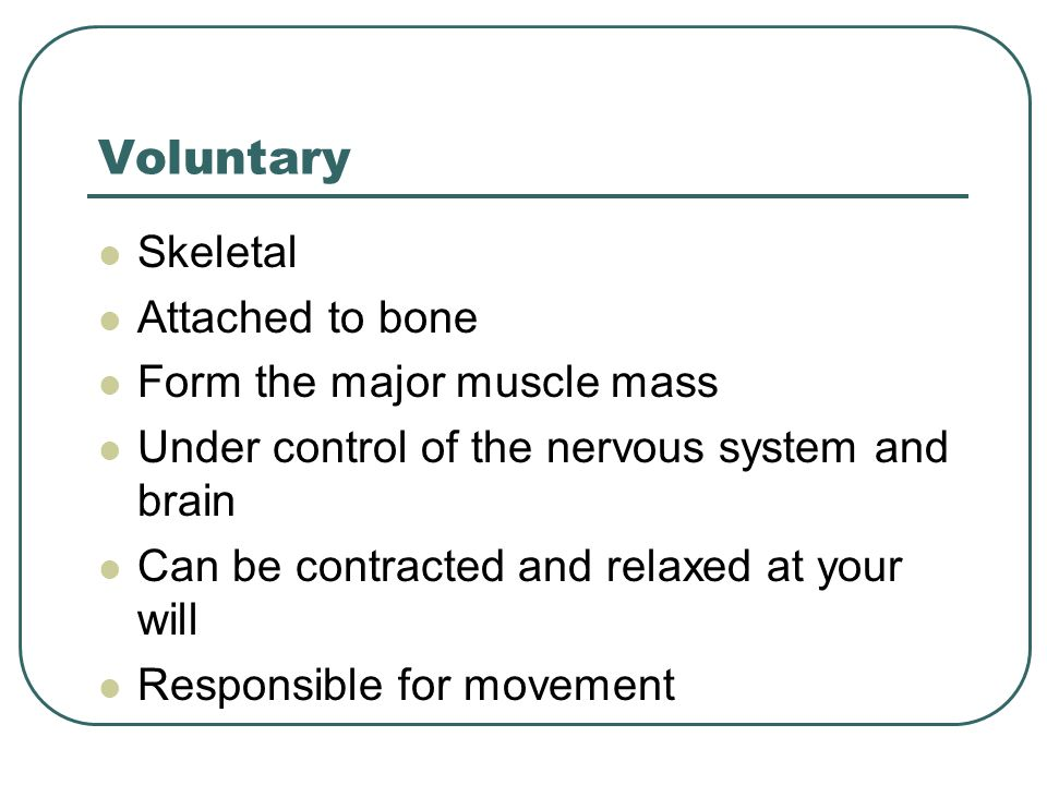 Voluntary Skeletal Attached to bone Form the major muscle mass Under control of the nervous system and brain Can be contracted and relaxed at your wil