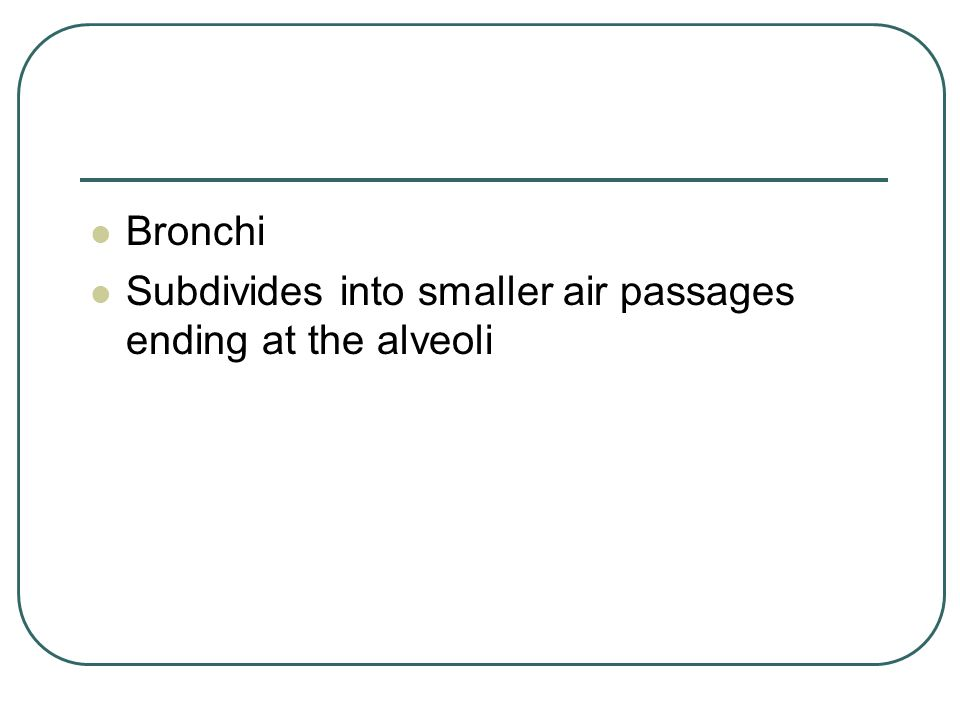 Bronchi Subdivides into smaller air passages ending at the alveoli