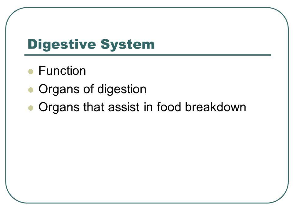 Digestive System Function Organs of digestion Organs that assist in food breakdown