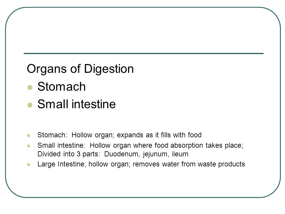 Organs of Digestion Stomach Small intestine Stomach: Hollow organ; expands as it fills with food Small intestine: Hollow organ where food absorption t