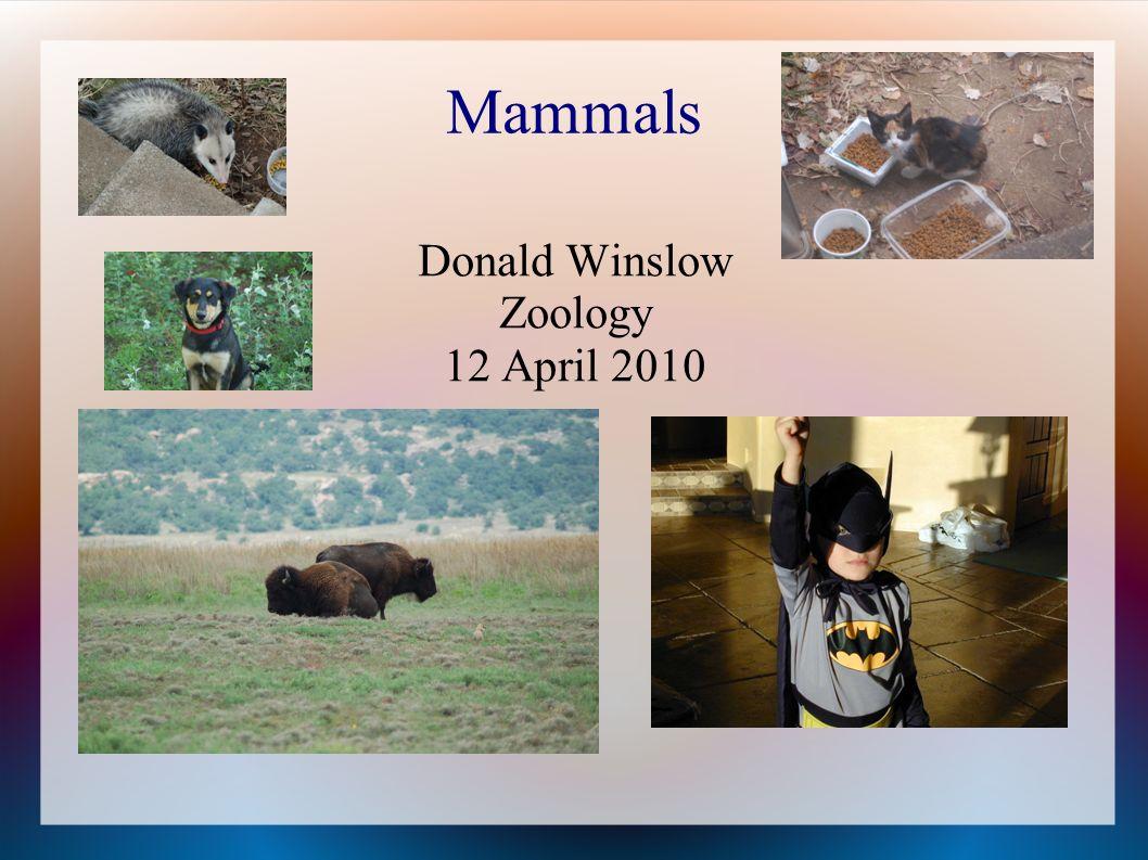 Mammals Donald Winslow Zoology 12 April 2010