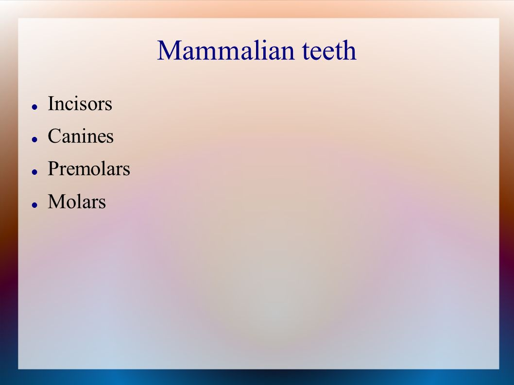 Mammalian teeth Incisors Canines Premolars Molars
