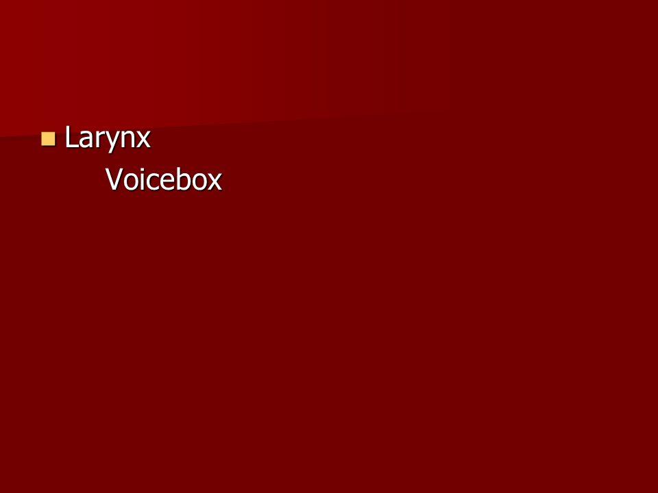 Larynx LarynxVoicebox