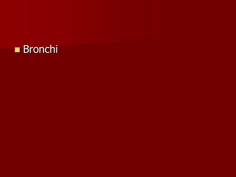 Bronchi Bronchi