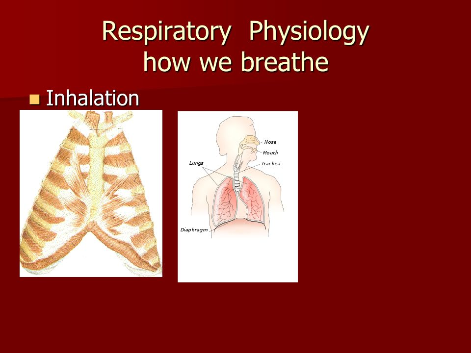 Respiratory Physiology how we breathe Inhalation Inhalation