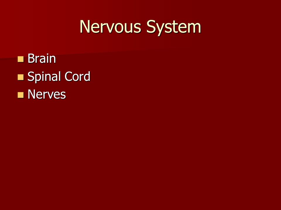 Nervous System Brain Brain Spinal Cord Spinal Cord Nerves Nerves