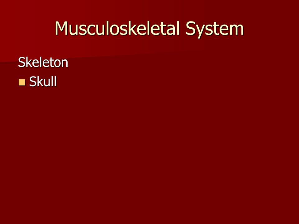 Musculoskeletal System Skeleton Skull Skull