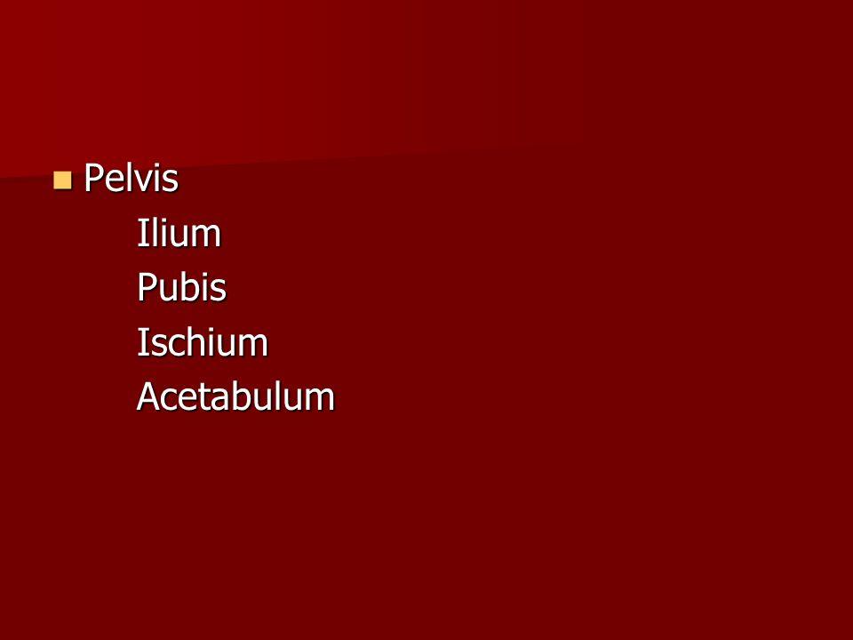 Pelvis PelvisIliumPubisIschiumAcetabulum