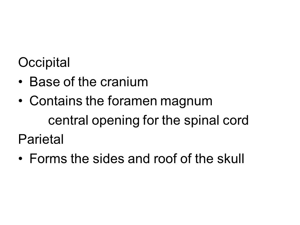 Occipital Base of the cranium Contains the foramen magnum central opening for the spinal cord Parietal Forms the sides and roof of the skull