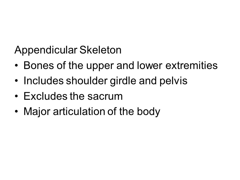 Appendicular Skeleton Bones of the upper and lower extremities Includes shoulder girdle and pelvis Excludes the sacrum Major articulation of the body