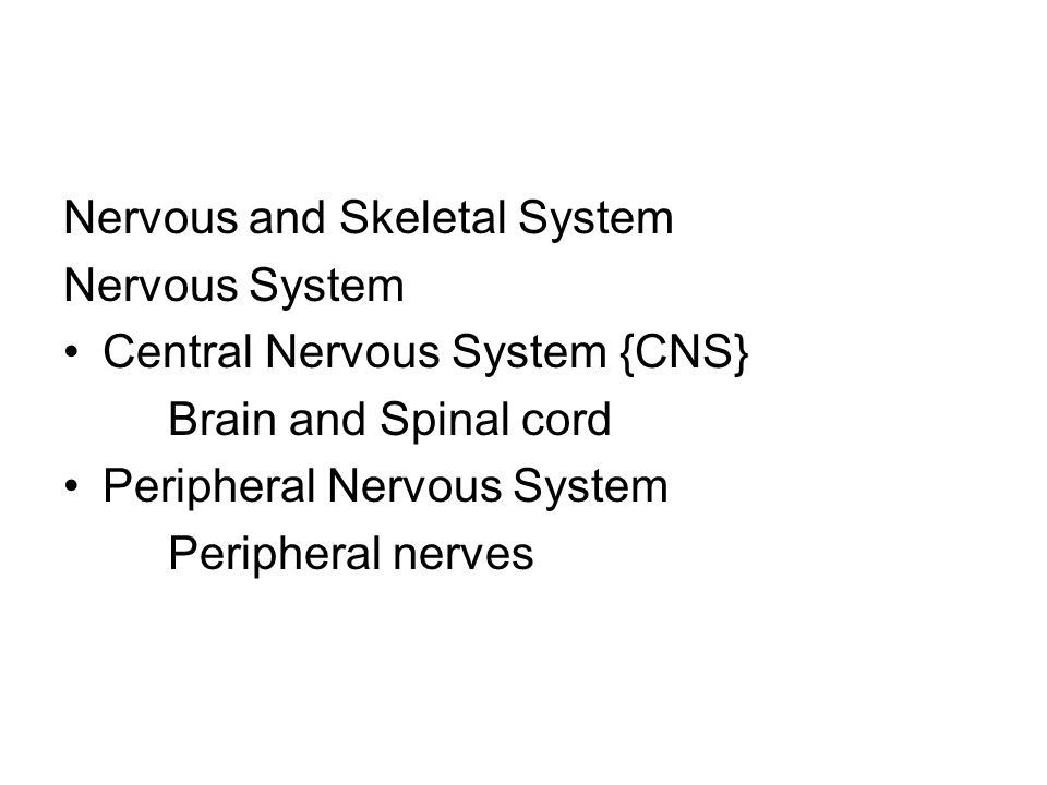 Sensory nerves Messages from the body to the brain Motor nerves Messages from the brain to the muscles Nerves exit the brain and down the spinal cord and cross over *an injury to left side of the brain may produce effects on the right side