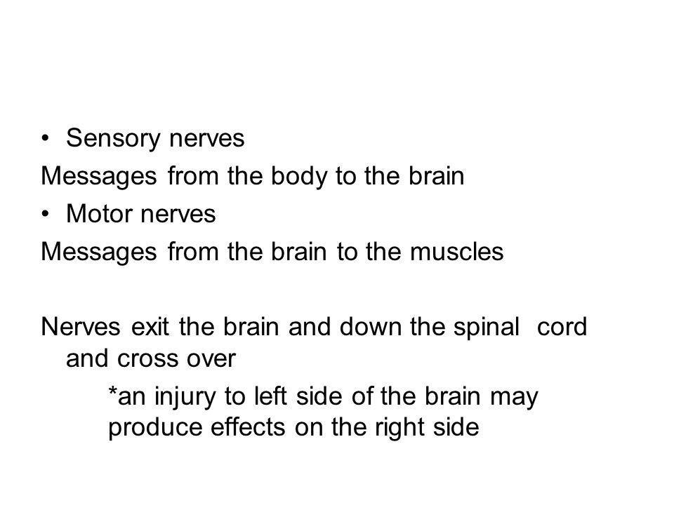 Sensory nerves Messages from the body to the brain Motor nerves Messages from the brain to the muscles Nerves exit the brain and down the spinal cord