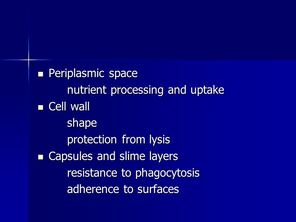 Periplasmic space Periplasmic space nutrient processing and uptake Cell wall Cell wallshape protection from lysis Capsules and slime layers Capsules and slime layers resistance to phagocytosis adherence to surfaces