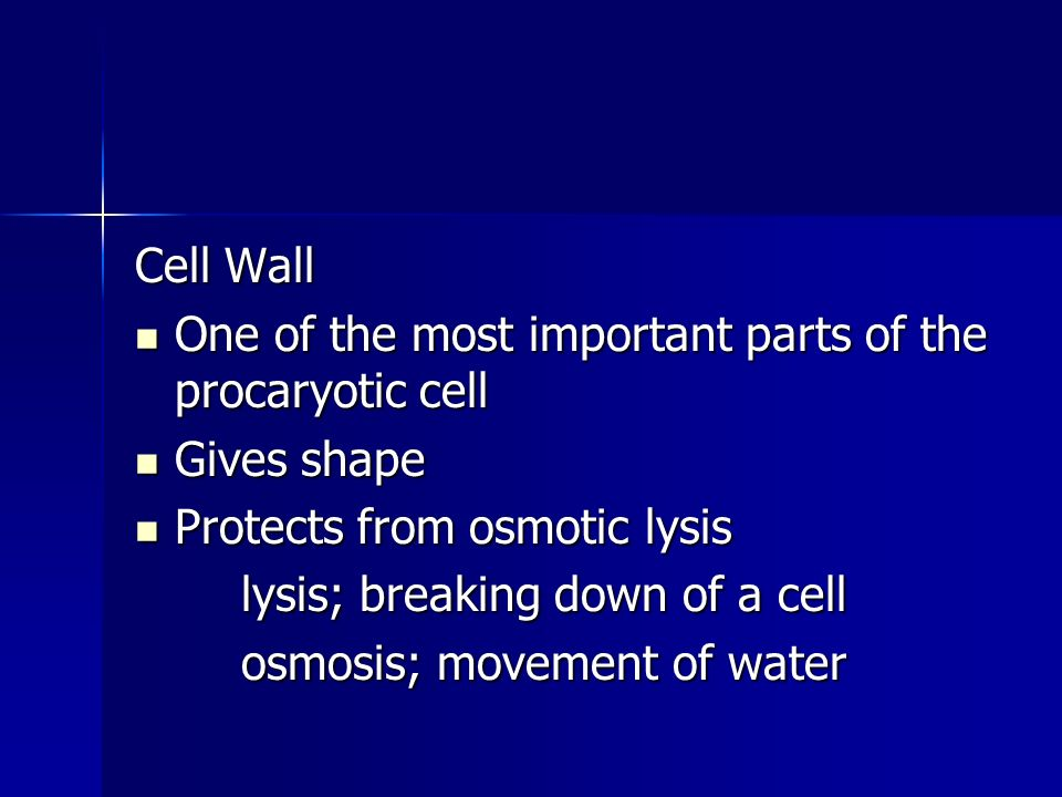 Cell Wall One of the most important parts of the procaryotic cell One of the most important parts of the procaryotic cell Gives shape Gives shape Protects from osmotic lysis Protects from osmotic lysis lysis; breaking down of a cell osmosis; movement of water