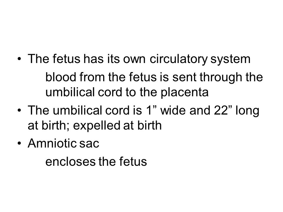 The fetus has its own circulatory system blood from the fetus is sent through the umbilical cord to the placenta The umbilical cord is 1 wide and 22 l