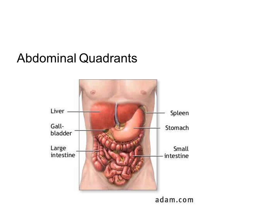 Abdominal Quadrants