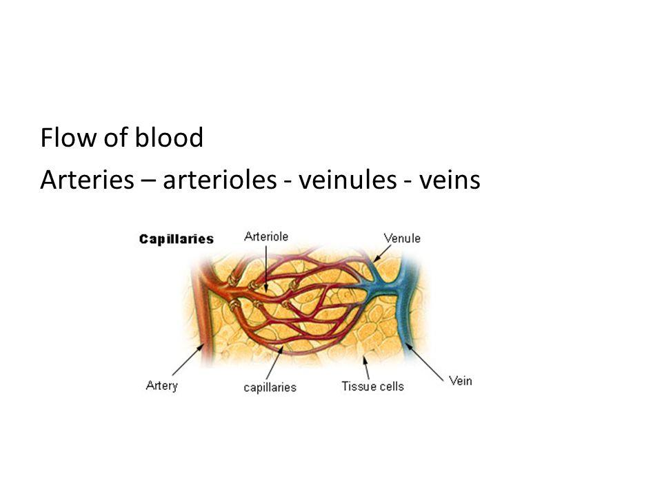 Flow of blood Arteries – arterioles - veinules - veins