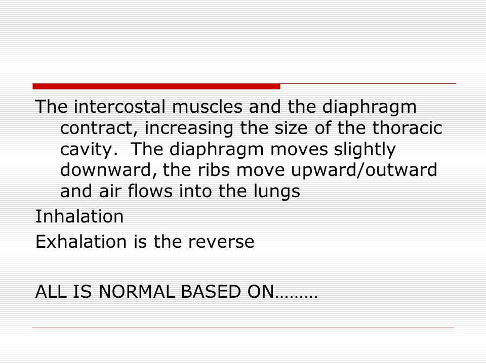 The intercostal muscles and the diaphragm contract, increasing the size of the thoracic cavity.