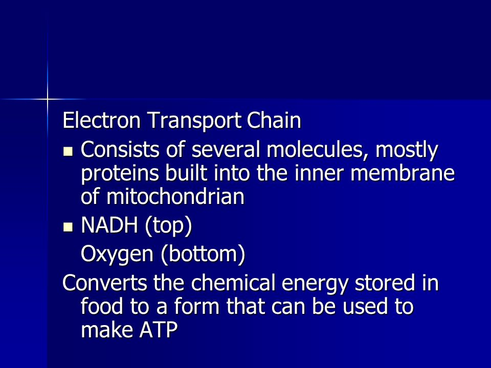 Electron Transport Chain Consists of several molecules, mostly proteins built into the inner membrane of mitochondrian Consists of several molecules,