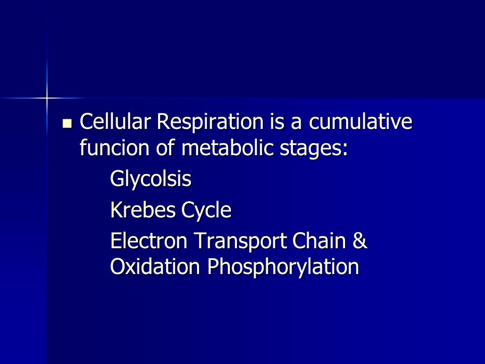 Cellular Respiration is a cumulative funcion of metabolic stages: Cellular Respiration is a cumulative funcion of metabolic stages:Glycolsis Krebes Cycle Electron Transport Chain & Oxidation Phosphorylation