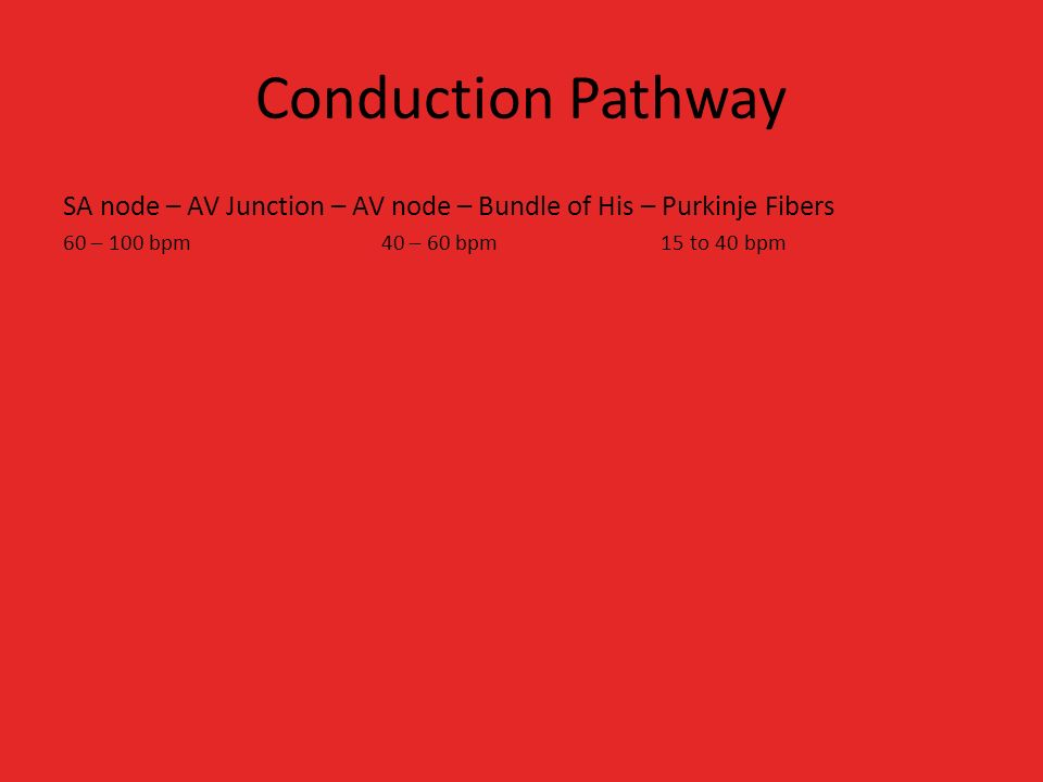 Conduction Pathway SA node – AV Junction – AV node – Bundle of His – Purkinje Fibers 60 – 100 bpm 40 – 60 bpm 15 to 40 bpm