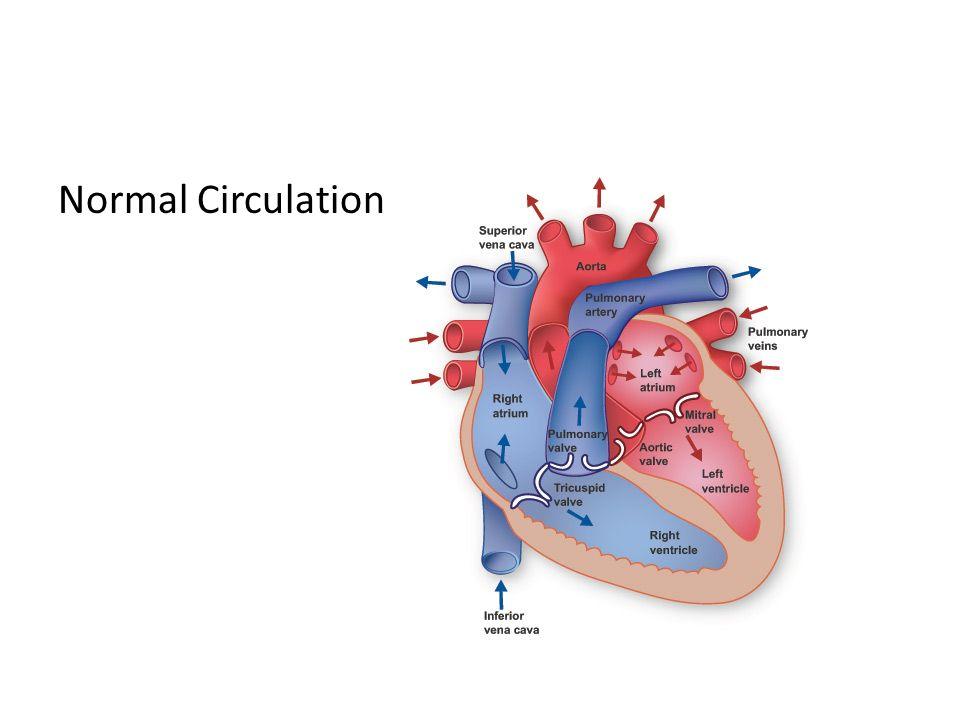 Normal Circulation