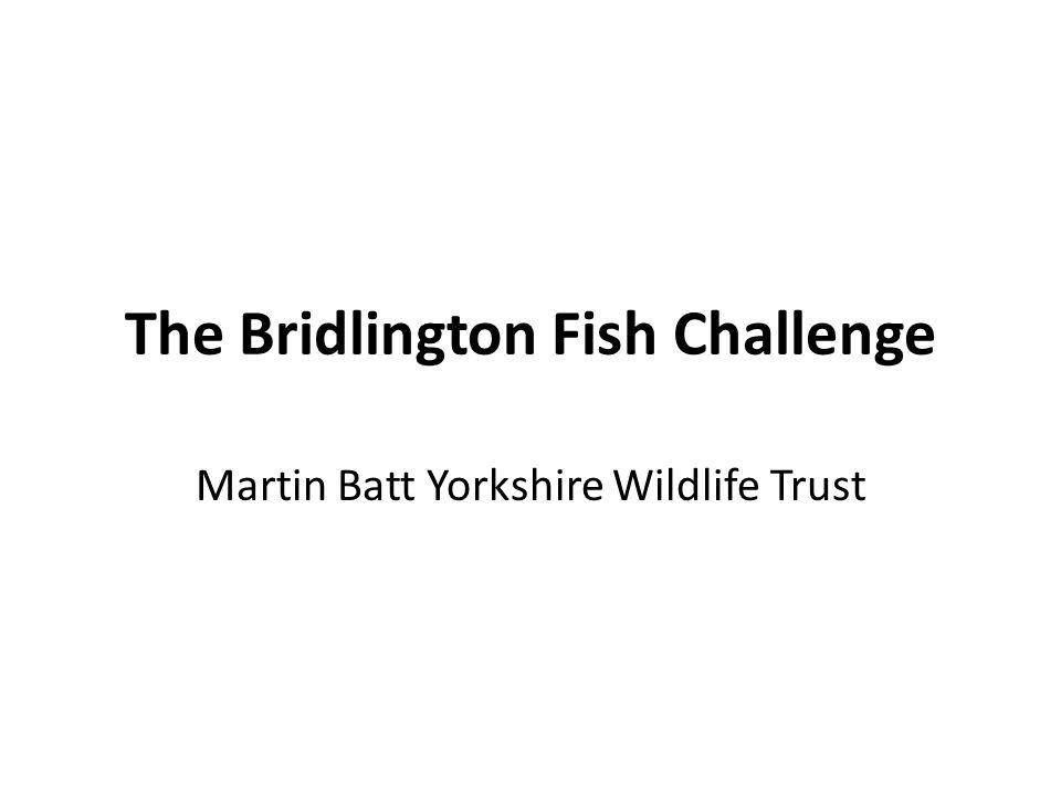 The Bridlington Fish Challenge Martin Batt Yorkshire Wildlife Trust