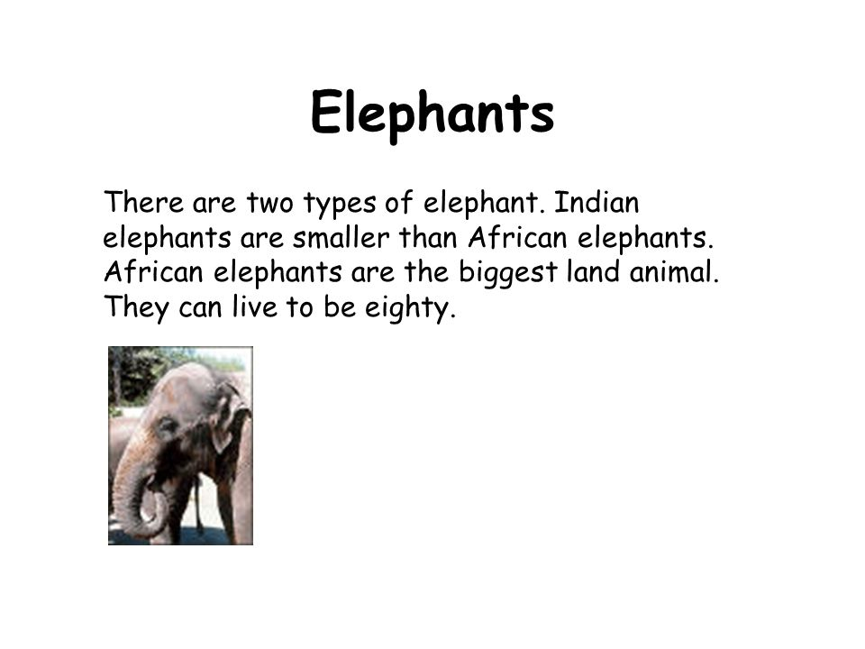 There are two types of elephant. Indian elephants are smaller than African elephants. African elephants are the biggest land animal. They can live to