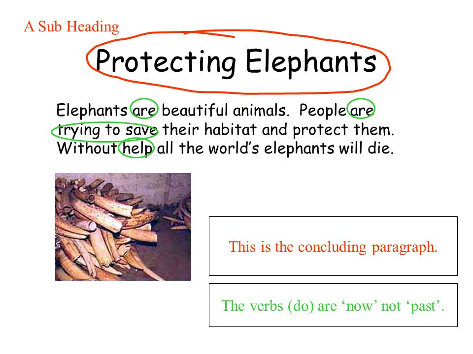 Protecting Elephants Elephants are beautiful animals. People are trying to save their habitat and protect them. Without help all the worlds elephants