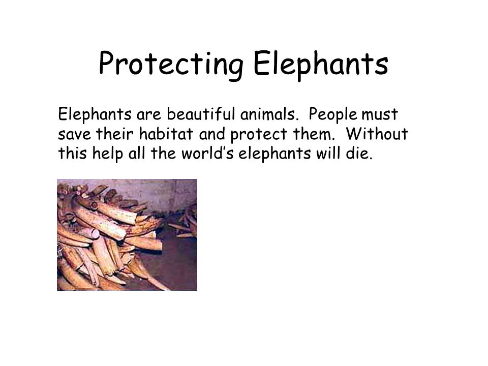 Protecting Elephants Elephants are beautiful animals.