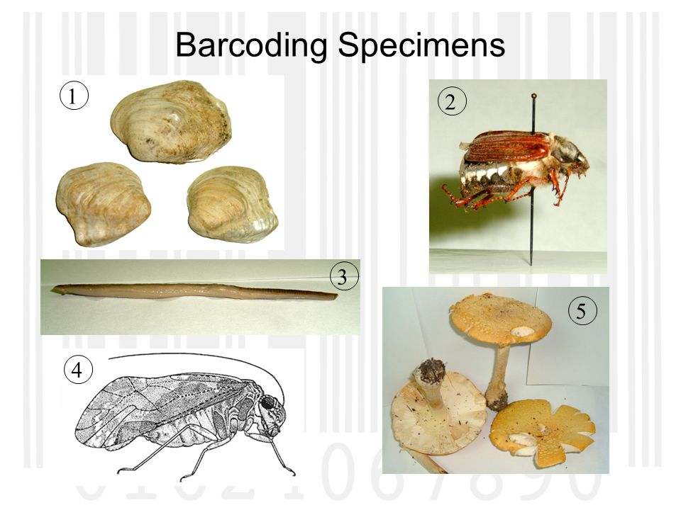 Barcoding Specimens