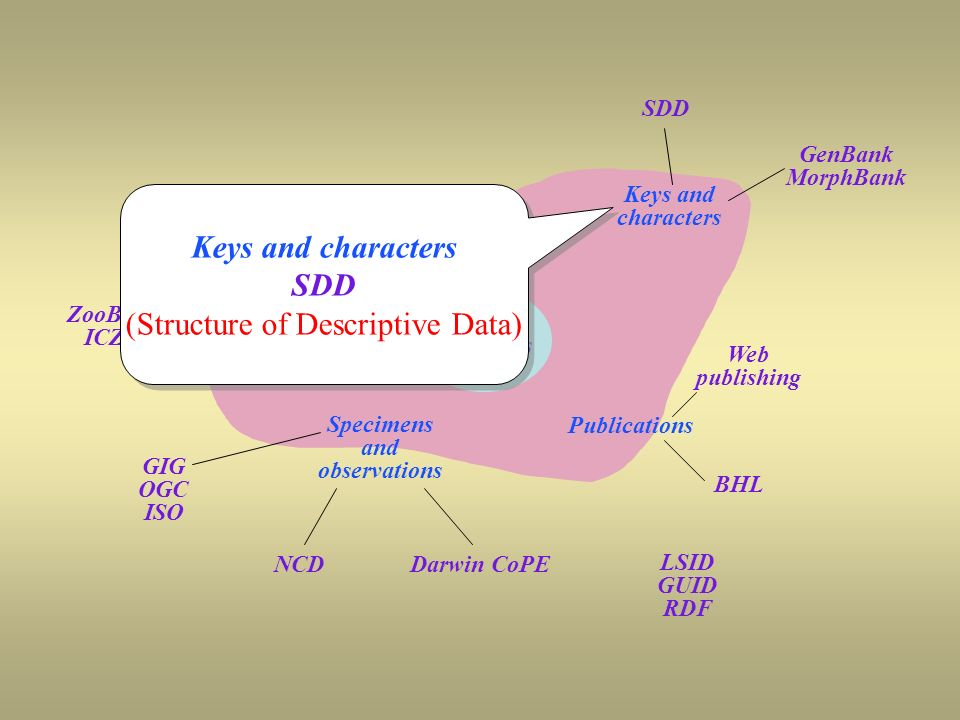 OSF coverage SDD Keys and characters GenBank MorphBank Taxon Names TCN TCS ZooBank ICZN GIG OGC ISO NCD Specimens and observations Darwin CoPE Publications BHL Web publishing LSID GUID RDF Taxon Concepts Keys and characters SDD (Structure of Descriptive Data) Keys and characters SDD (Structure of Descriptive Data)