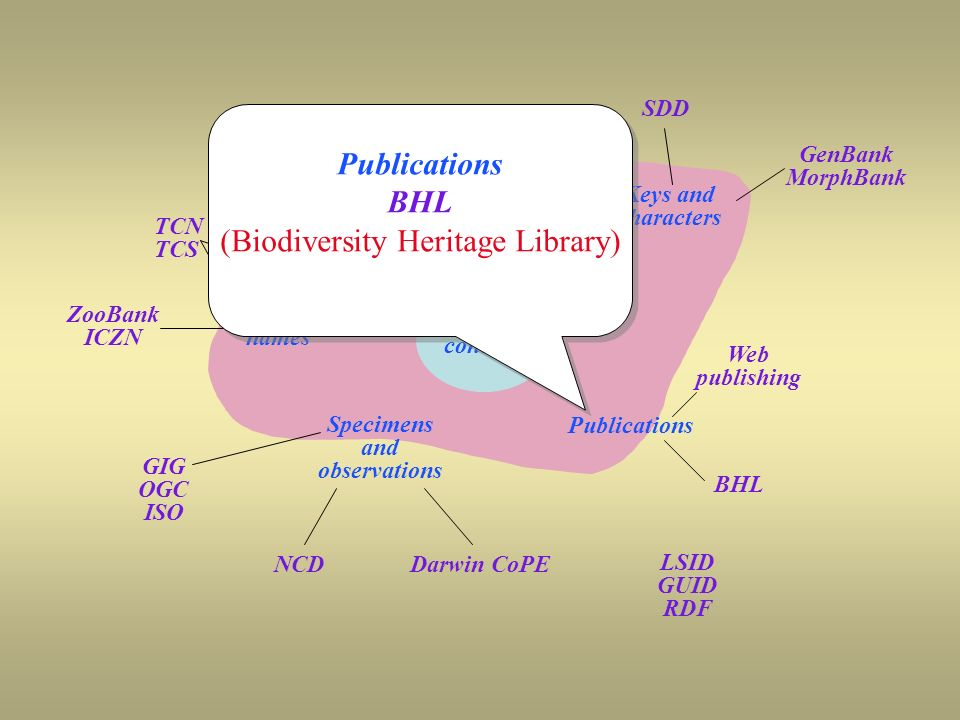 OSF coverage SDD Keys and characters GenBank MorphBank Taxon names TCN TCS ZooBank ICZN GIG OGC ISO NCD Specimens and observations Darwin CoPE Publications BHL Web publishing LSID GUID RDF Taxon concepts Publications BHL (Biodiversity Heritage Library) Publications BHL (Biodiversity Heritage Library)
