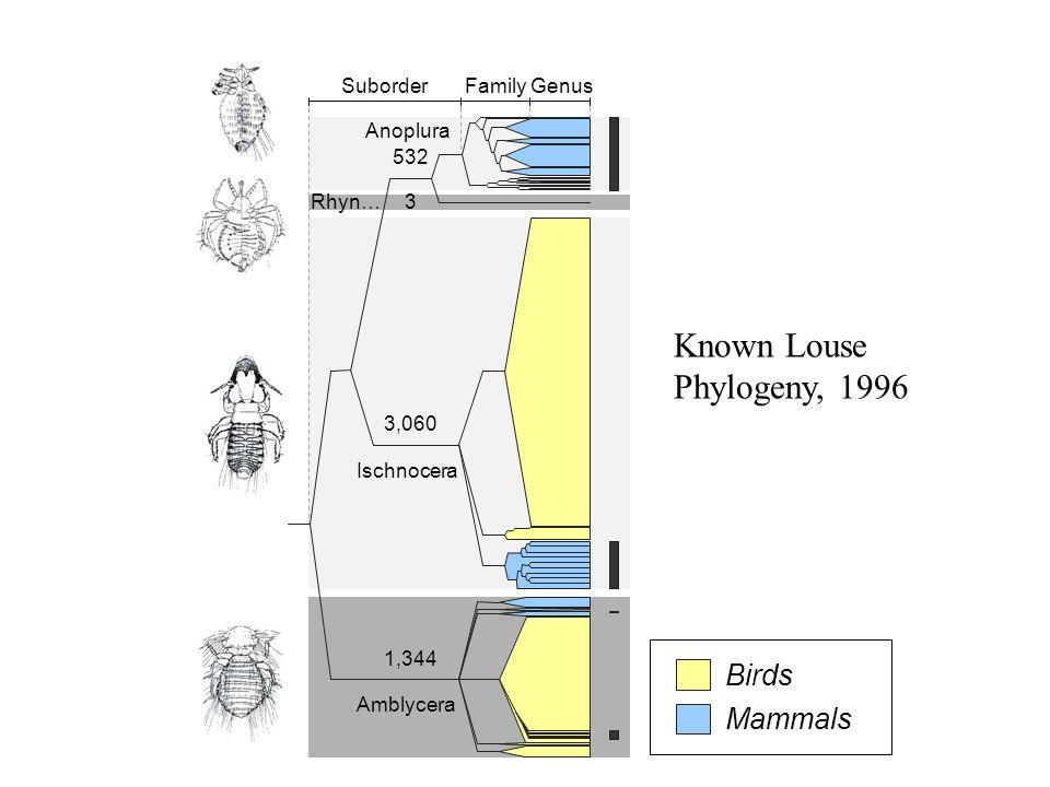 Rhyn… GenusFamilySuborder Amblycera Ischnocera Anoplura 3 532 3,060 1,344 Mammals Birds Amblycera Ischnocera Rhyn… Anoplura Known Louse Phylogeny, 199