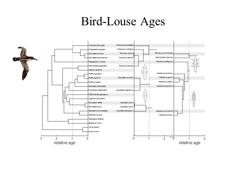 Bird-Louse Ages relative age 1230012012
