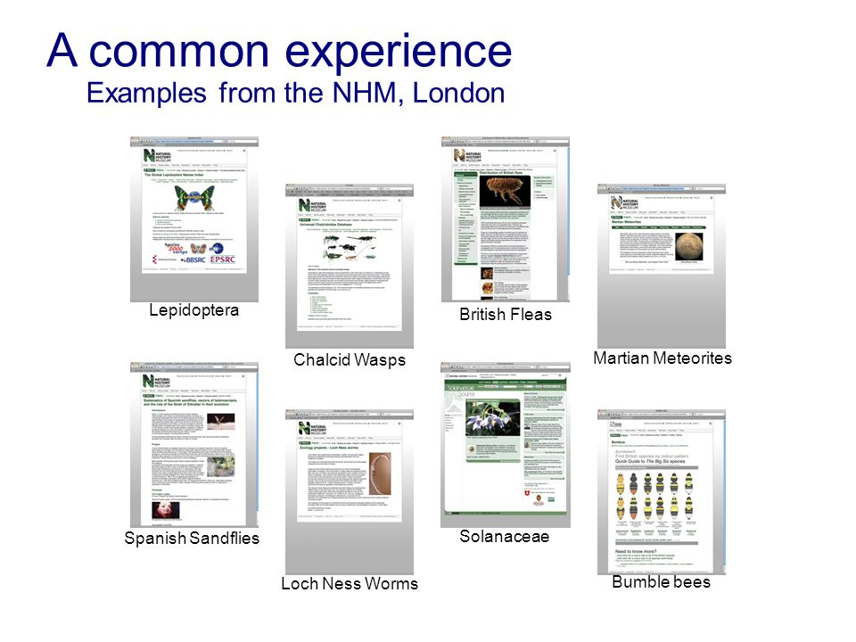 A common experience Examples from the NHM, London Spanish Sandflies Lepidoptera Solanaceae Chalcid Wasps British Fleas Martian Meteorites Loch Ness Wo