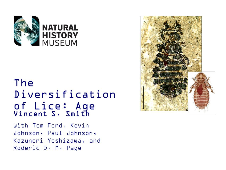 The Diversification of Lice: Age Vincent S.