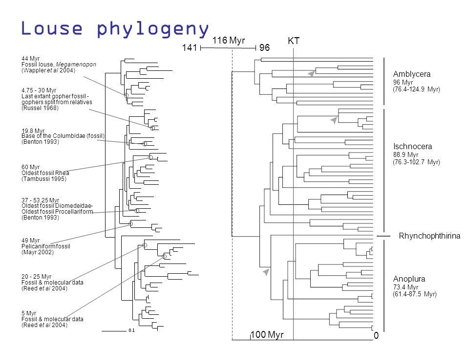 Louse phylogeny Oldest fossil Diomedeidae- (Wappler et al 2004) 44 Myr Fossil louse, Megamenopon 4.75 - 30 Myr Last extant gopher fossil - (Russel 1968) 19.8 Myr Base of the Columbidae (fossil) (Benton 1993) 60 Myr Oldest fossil Rhea (Tambussi 1995) 37 - 53.25 Myr Oldest fossil Procellariform (Benton 1993) 49 Myr Pelicaniform fossil (Mayr 2002) 20 - 25 Myr Fossil & molecular data (Reed et al 2004) 5 Myr Fossil & molecular data (Reed et al 2004) gophers split from relatives Amblycera 96 Myr (76.4-124.9 Myr) Ischnocera 88.9 Myr (76.3-102.7 Myr) Anoplura 73.4 Myr (61.4-87.5 Myr) Rhynchophthirina 0 100 Myr KT 96 141 116 Myr