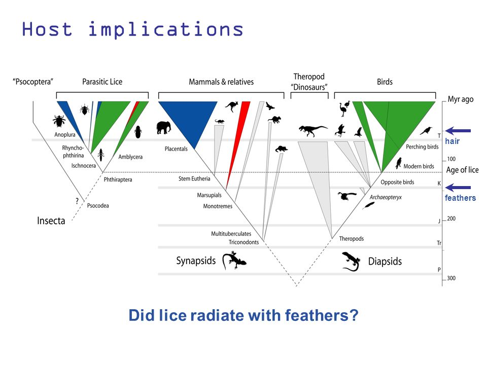Host implications Lice radiated on birds first Mammal lice are young These groups colonized mammals Placental Mammals Marsupials Birds What were the first louse hosts.