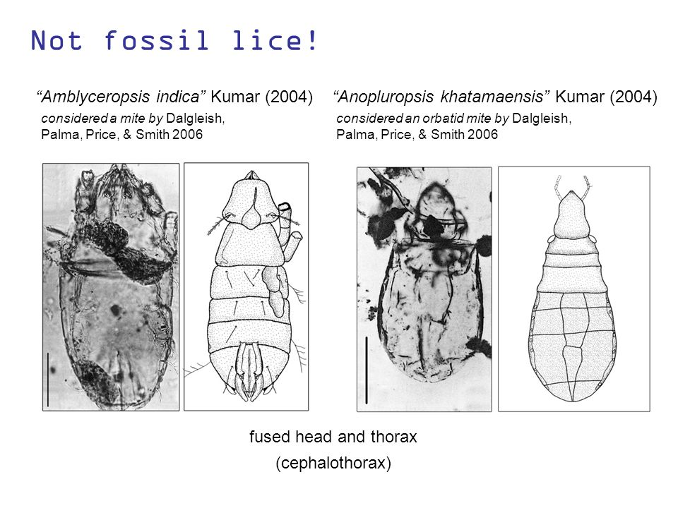 Not fossil lice.