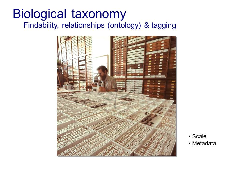 Biological taxonomy Findability, relationships (ontology) & tagging Scale Metadata