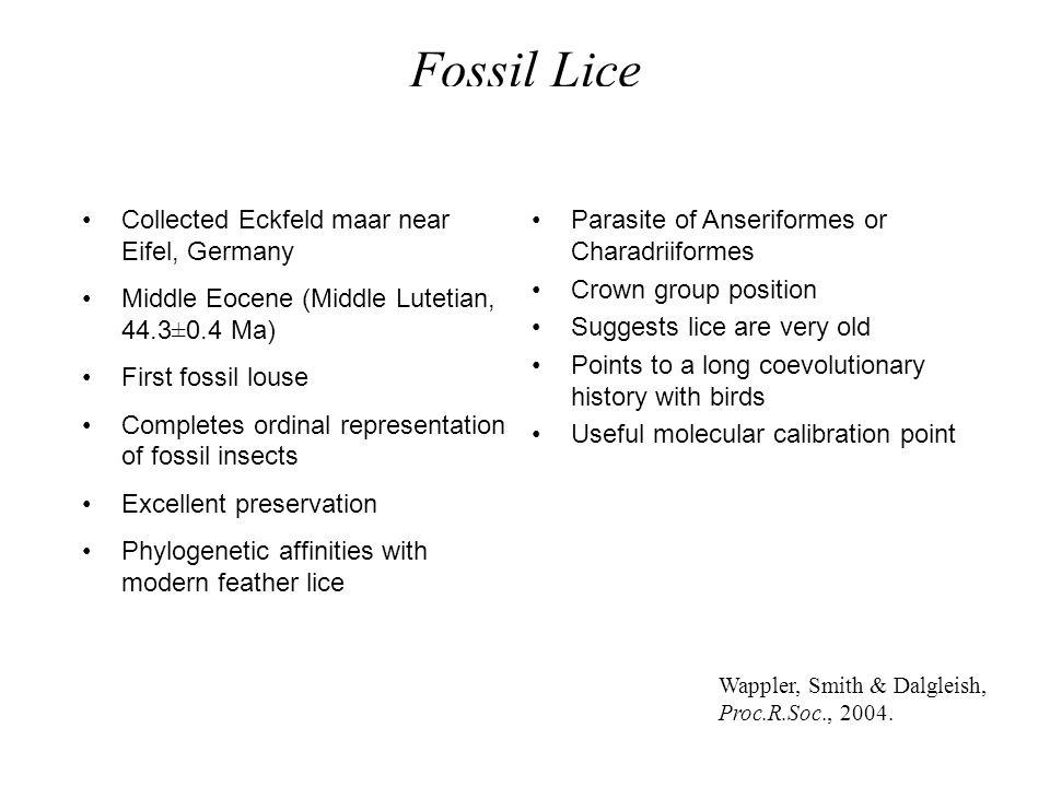 Fossil Lice Psocoptera Menacanthus / Menopon -complex Ricinidae Laemobothriidae Boopiidae Austromenopon -complex Dennyus -complex Colpocephalum -compl