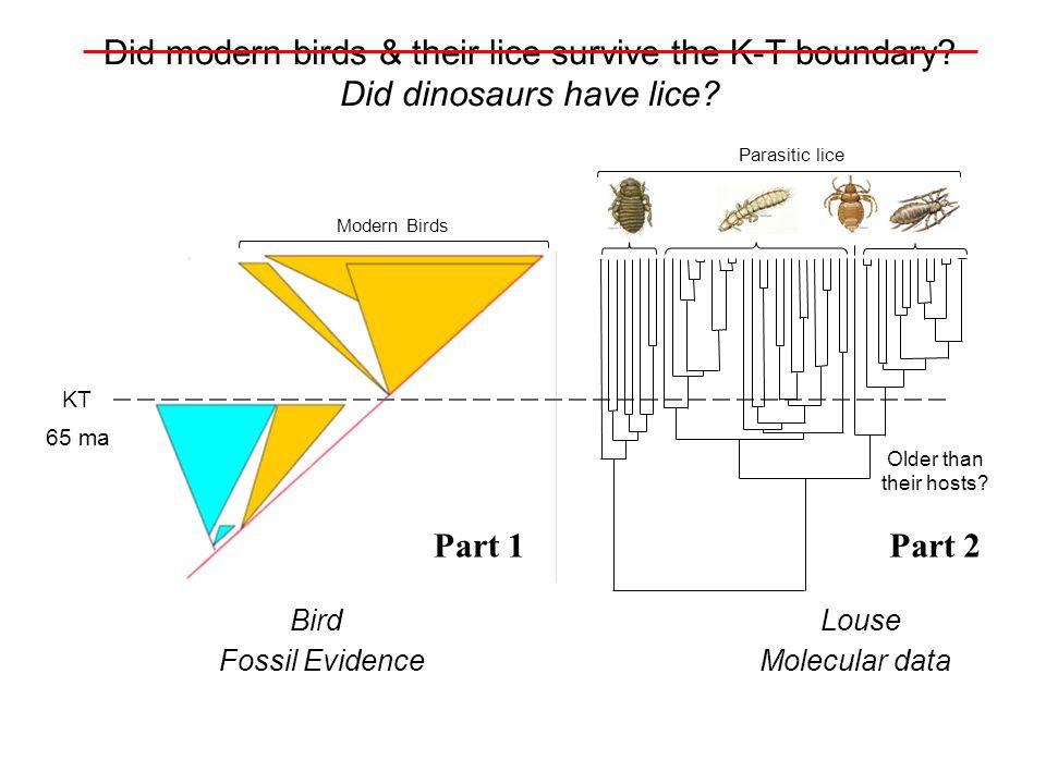 Modern Birds Fossil Evidence Bird KT 65 ma What about their parasites? Older than their hosts? Parasitic lice Molecular data Louse Did modern birds &
