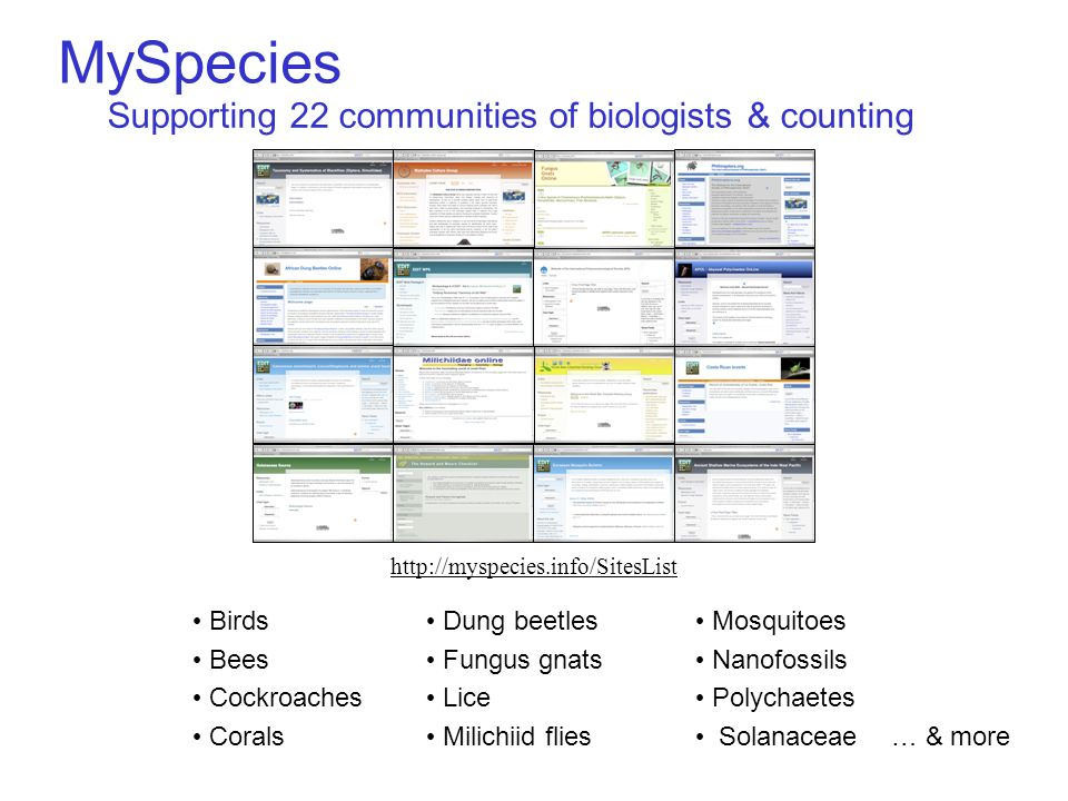 MySpecies … & more Birds Bees Cockroaches Corals Dung beetles Fungus gnats Lice Milichiid flies Mosquitoes Nanofossils Polychaetes Solanaceae Supporting 22 communities of biologists & counting http://myspecies.info/SitesList