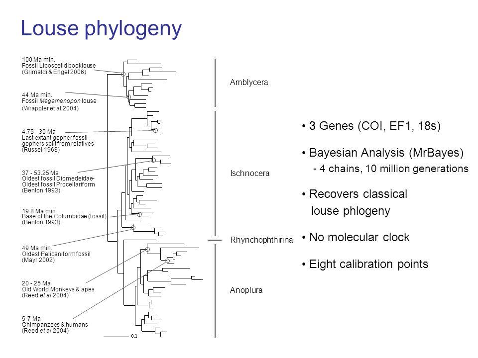 Louse phylogeny Amblycera Ischnocera Anoplura Rhynchophthirina 3 Genes (COI, EF1, 18s) No molecular clock Bayesian Analysis (MrBayes) - 4 chains, 10 million generations Recovers classical louse phlogeny Eight calibration points (Grimaldi & Engel 2006) 100 Ma min.