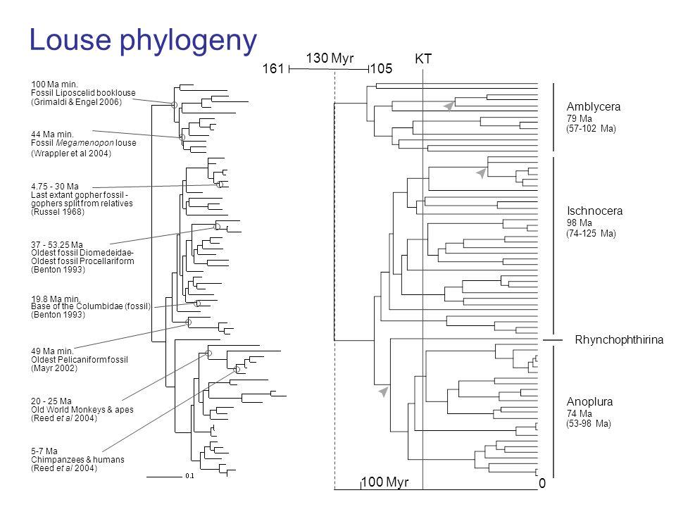 Louse phylogeny Amblycera 79 Ma (57-102 Ma) Ischnocera 98 Ma (74-125 Ma) Anoplura 74 Ma (53-98 Ma) Rhynchophthirina 0 100 Myr KT 105 161 130 Myr (Grimaldi & Engel 2006) 100 Ma min.