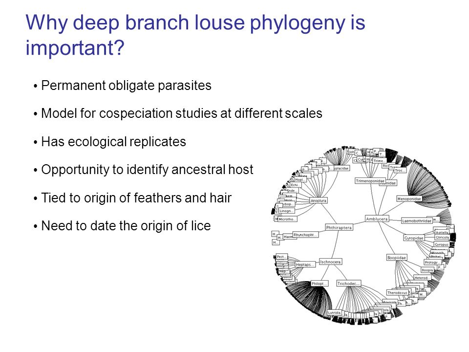 Why deep branch louse phylogeny is important? Permanent obligate parasites Has ecological replicates Opportunity to identify ancestral host Tied to or