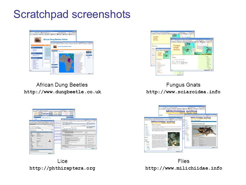 Scratchpad screenshots Lice http://phthiraptera.org Flies http://www.milichiidae.info Fungus Gnats http://www.sciaroidea.info African Dung Beetles htt